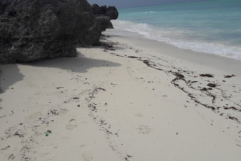 Beach Plot for sale in Zanzibar