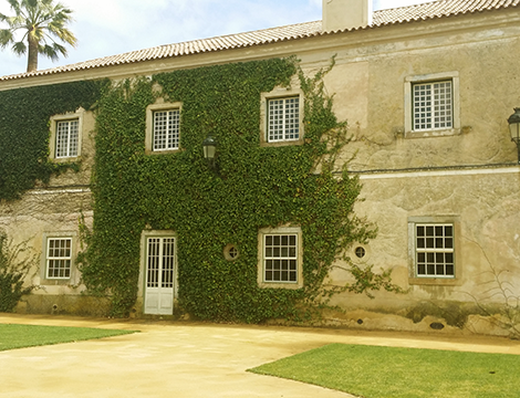 Established in 1498, this beautiful, historic wine estate is located in the demarcated Lisbon region, near to the village of Pancas (Alenquer)